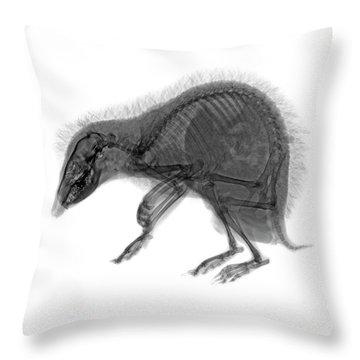 C037/9600 Throw Pillow
