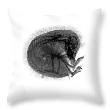 C037/9601 Throw Pillow