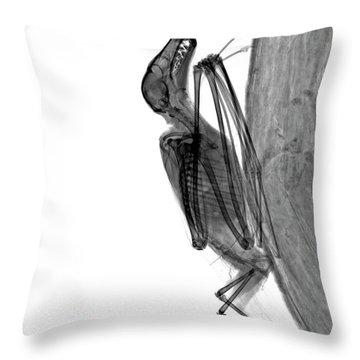 C037/9604 Throw Pillow