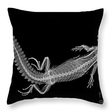 C038/4647 Throw Pillow