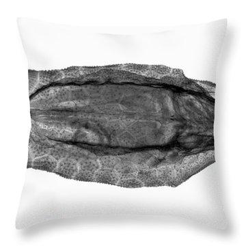 C038/4736 Throw Pillow