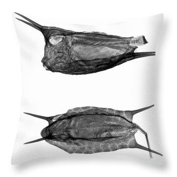 C038/4737 Throw Pillow