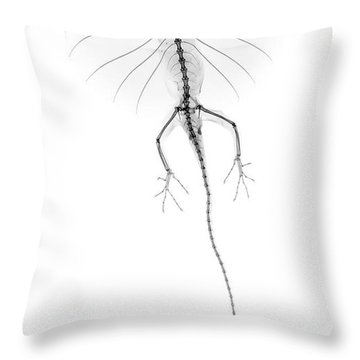 C046/1738 Throw Pillow