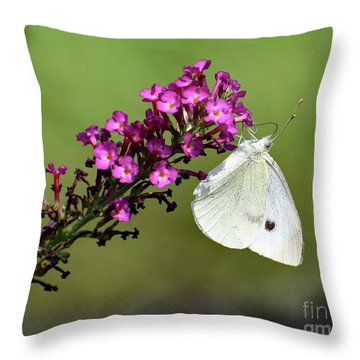 Cabbage White And Butterfly Bush Throw Pillow