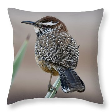 Cactus Wren Throw Pillow