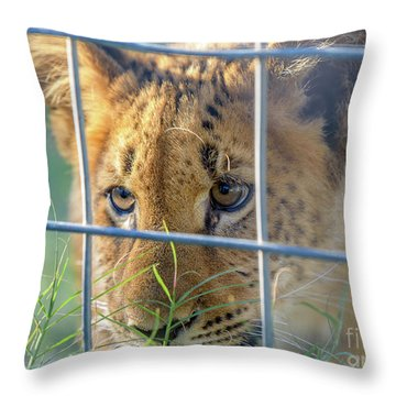 Throw Pillow featuring the photograph Caged by Dheeraj Mutha