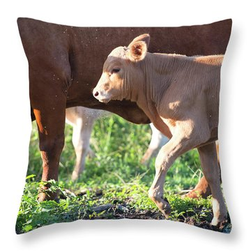 Throw Pillow featuring the photograph Calf by Rob D Imagery