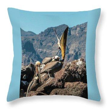 California Brown Pelicans In Ilsa Danzante Harbor Throw Pillow