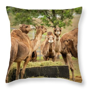 Throw Pillow featuring the photograph Camels Out Amongst Nature by Rob D Imagery