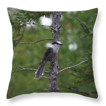 Canada Jay 101305 Throw Pillow