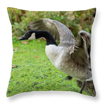 Throw Pillow featuring the photograph Canadian Goose With Wings Stretched by Scott Lyons