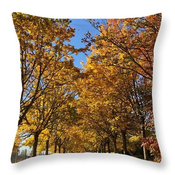 Throw Pillow featuring the photograph Canopy Of Color by Brian Eberly