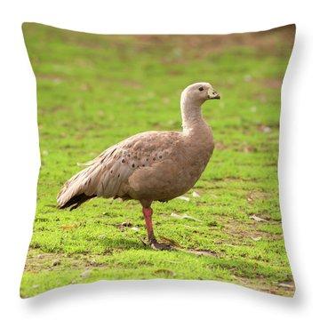 Cape Barron Goose Throw Pillow