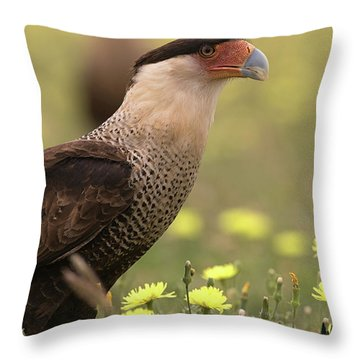 Caracara In Wildflowers Throw Pillow
