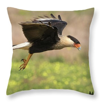 Caracara Taking Off Throw Pillow