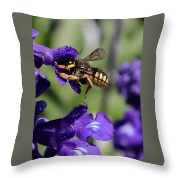 Carder Bee On Salvia Throw Pillow