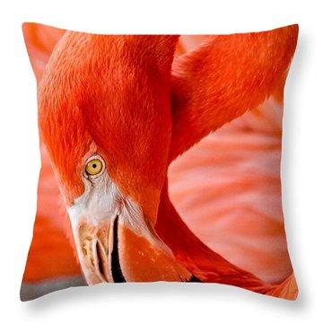 Caribbean Flamingo Throw Pillow