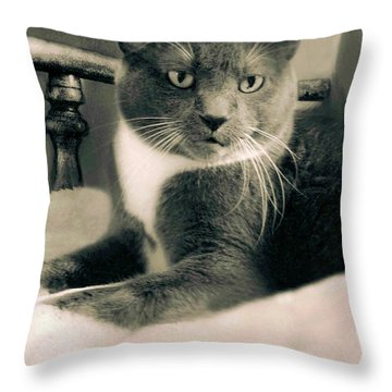 Cat Boticas Portrait  7 Throw Pillow