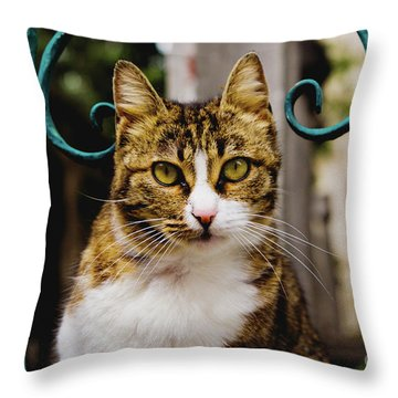 Cat On A Fence Throw Pillow
