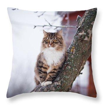 Fluffy Throw Pillows