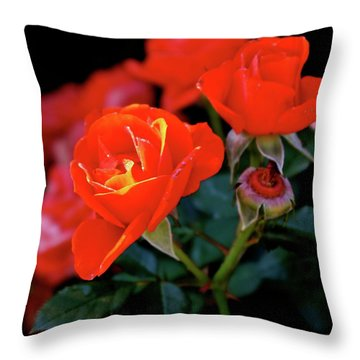 Catch The Morning Throw Pillow