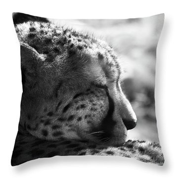 Throw Pillow featuring the photograph Catnap by Whitney Goodey