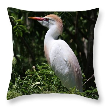 Cattle Egret With Breeding Feathers Throw Pillow