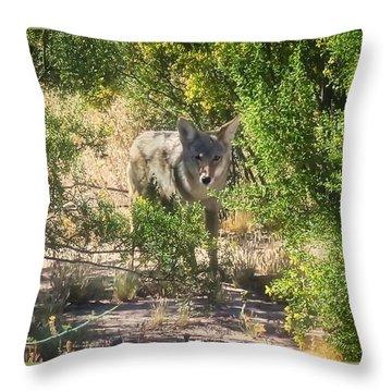 Cautious Coyote Throw Pillow