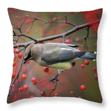 Cedar Waxwing 102206 Throw Pillow