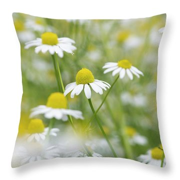 Throw Pillow featuring the photograph Chamomile Flowers by Tim Gainey