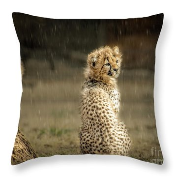 Cheetah Cubs And Rain 0168 Throw Pillow
