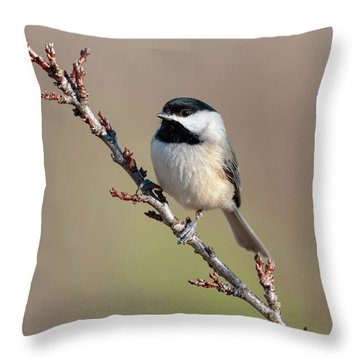 Throw Pillow featuring the photograph Chickadee Hint Of Spring by Lara Ellis