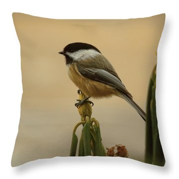 Chickadee On Rhododendron Throw Pillow