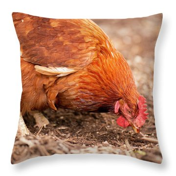 Chicken On The Farm Throw Pillow
