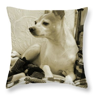 Chihuahua Chiqui  Portrait  Throw Pillow