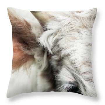 Chillingham Cattle Close-up Throw Pillow
