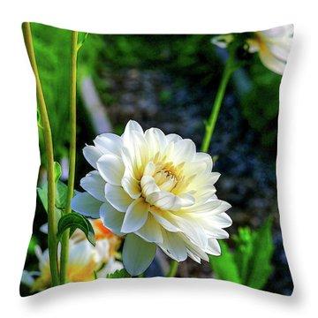 Chrysanthemum In Bloom Throw Pillow