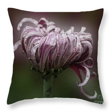 Throw Pillow featuring the photograph Chrysanthemum 'lily Gallon' by Ann Jacobson