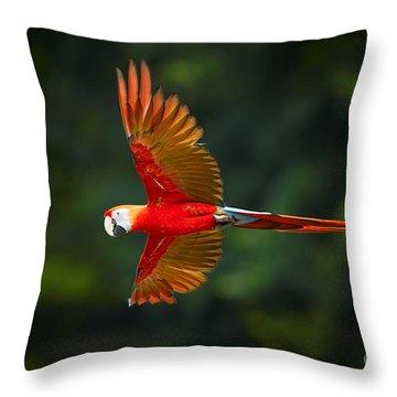 Scarlet Throw Pillows