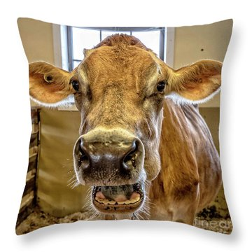 Close Up Of A Jersey Dairy Cow Throw Pillow