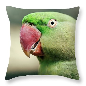 Throw Pillow featuring the photograph Close Up Of A King Parrot by Rob D Imagery