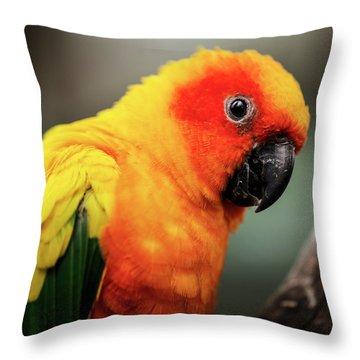 Close Up Of A Sun Conure Parrot. Throw Pillow