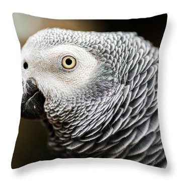 Close Up Of An African Grey Parrot Throw Pillow