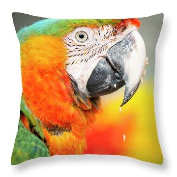 Close Up Of The Macaw Bird. Throw Pillow