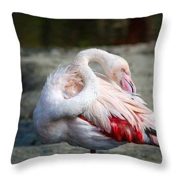 Waterfowl Throw Pillows
