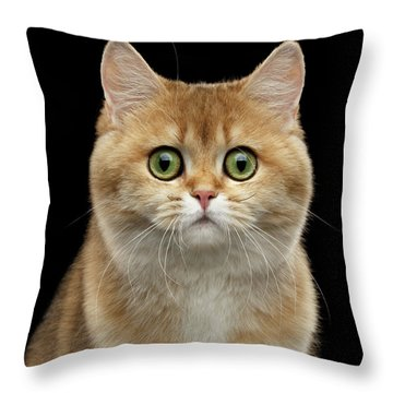 Close-up Portrait Of Golden British Cat With Green Eyes Throw Pillow
