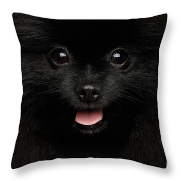 Throw Pillow featuring the photograph Close-up Portrait Of Happy Pomeranian Spitz Dog by Sergey Taran