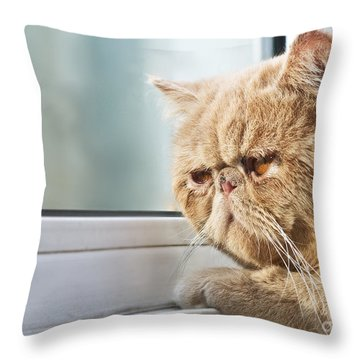 Old Blue Eyes Throw Pillows