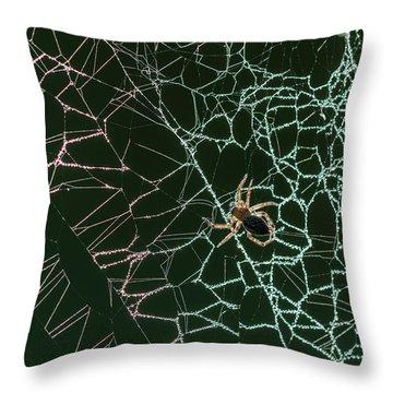 Cobwebs Creation Throw Pillow
