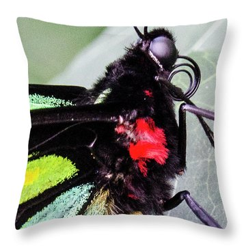 Color Up Close Throw Pillow
